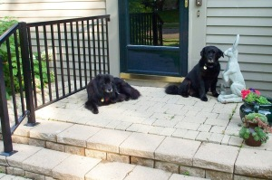 071815porchdogs2